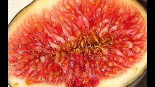 الغذاء المعجزة الذي يساعد دي علاج عدة أمراض خطيرة تعرفوا عليه الآن !