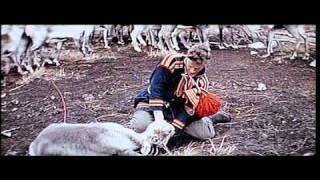 Laplander Reindeer Castration