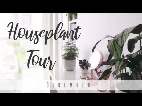 Houseplant Tour December 2018