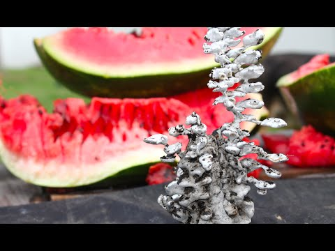 Pouring Molten Aluminum In a Watermelon. Awesome Surprise