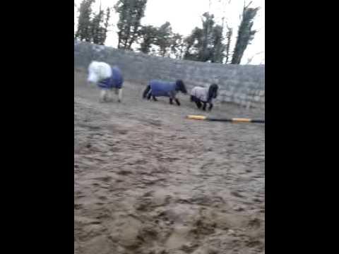 Xxx Mp4 Bold Little Horse Xxx 3gp Sex