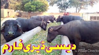 Low cast dairy farming in pakistan urdu/hindi
