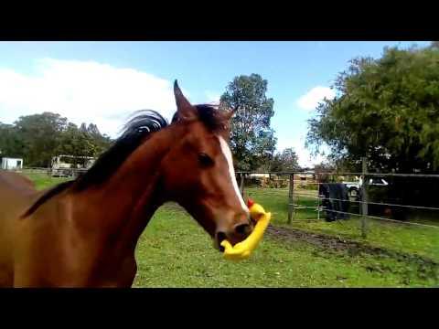 Horse vs Duck