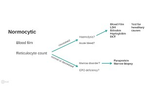 Anemia explained 3/3. A clinical approach