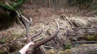 Nájdenie jeleních zhodov