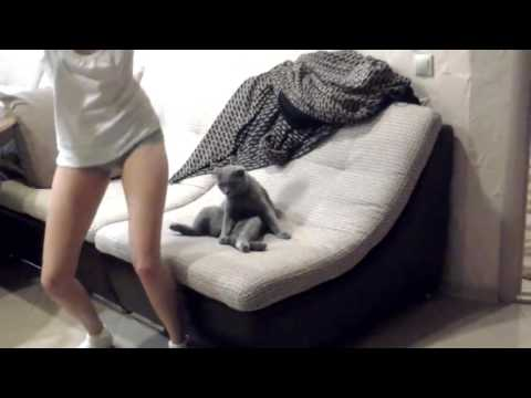 Girl Twerks Her Heart Out, Cat Doesn't Care Girl Tries Twerking for Sitting Cat Funny