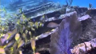 fish Beautiful underwater videos footage- ,free video download