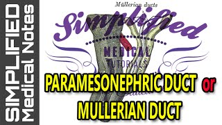 PARAMESONEPHRIC DUCT Or MULLERIAN DUCT Simplified | Embryology