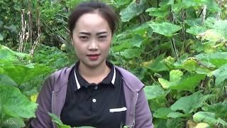 Beautiful Hmong Girls -xis vwj nkauj hmoob phav lav 22 / 8 / 2017