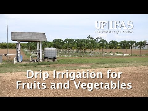 Drip Irrigation for Fruits and Vegetables