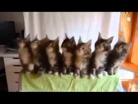 Gatos bailando thriller