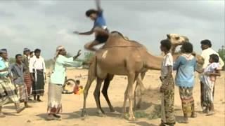 قبيلة الزرانيق اليمنية