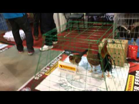 WORLD GAME FOWL EXPO JANUARY 18 2014