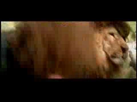 Aslan Kaplan ve Adamın dövüşü