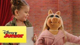 Momento Muppet - Contando
