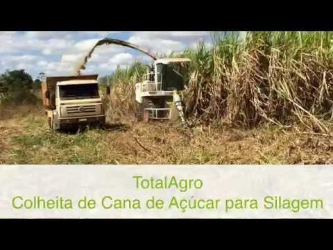 TotalAgro Colheita de Cana de Açúcar para Silagem com Forrageira Automotriz Autopropelida Claas