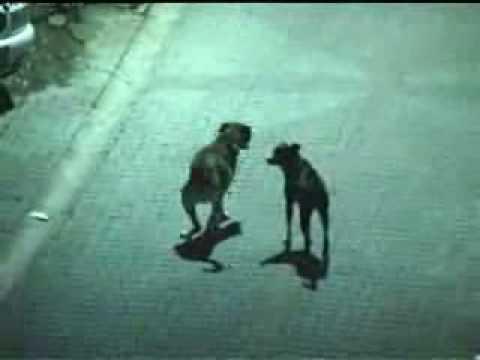 Ezan okunurken sokak köpeklerinin gösterdigi Tavir