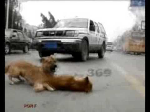 perros callejeros increible¡¡¡¡