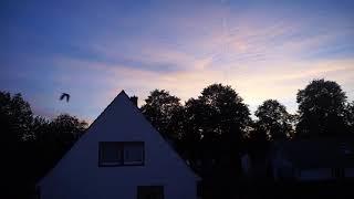منظر جميل للطيور/أسعد الله مساءكم أنتم ومن تحبون