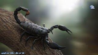 حقائق مذهلة عن العقارب | 430 مليون سنة يحكم الارض بـ 3 حواس فقط !!