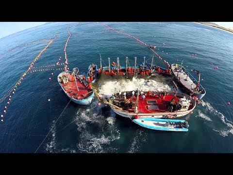 Amazing Big Fish Catching Vessel On The Sea Big Catch Fishing Process