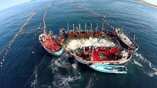 Amazing Big Fish Catching Vessel On The Sea, Big Catch Fishing Process
