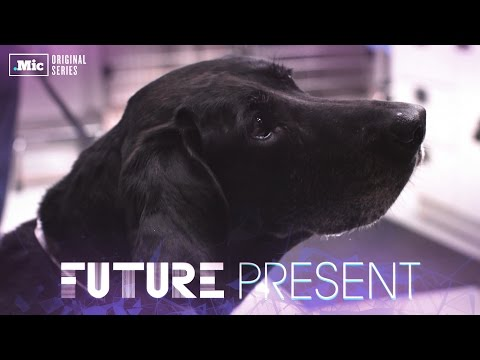 These dogs could be the new face of cancer treatment