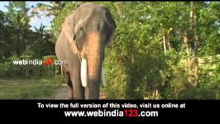 Puthenkulam Elephant Village