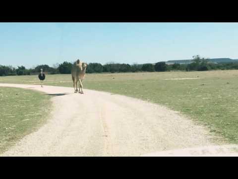 CAMEL vs. SUV