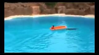 الدلافين في المسبح