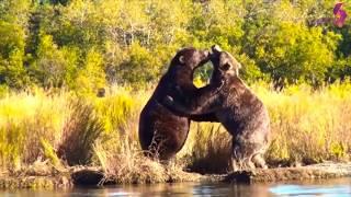 10 من أكثر مواجهات الحيوانات جنونا في العالم..!!