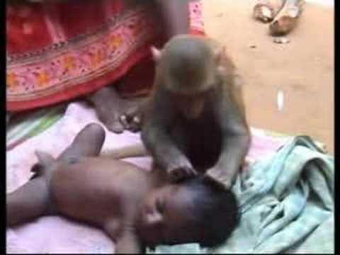 Monkey babysitter