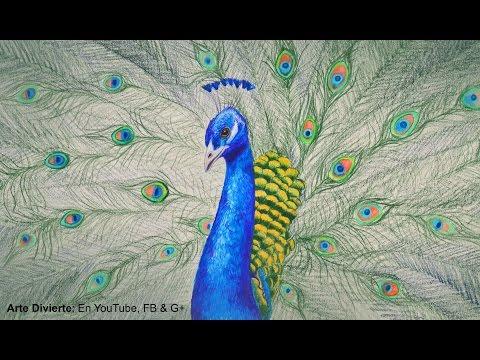 Cómo dibujar un pavo real con lápices de colores Arte Divierte.
