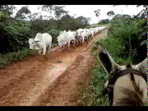 Comitiva Fazenda Talismã 5 27 03 2011