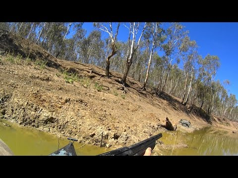 Xxx Mp4 Hunting Pigs In The Wilds Of NSW Australia Viewer Discretion Advised 3gp Sex