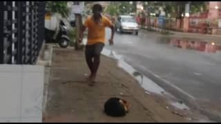 Indian funny videos dogs