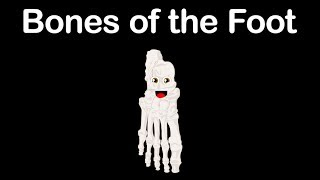 Foot Bones/Bones of the Feet/Foot Song