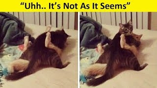 Pets Who Were Caught In Compromising Positions..