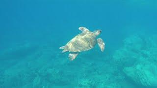 Snorkeling in Paros - Greece [HD]