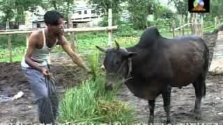 chittagong song ,chalo ray zia rotay(Shimul Shill )