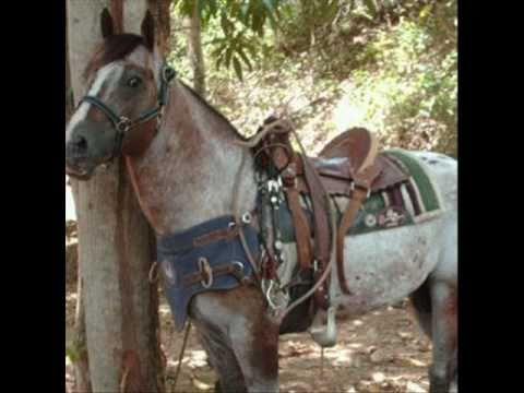 El Guasón El caballo record en el 2010.