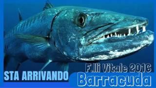 F.lli Vitale 2016 - Barracuda (Official Video)