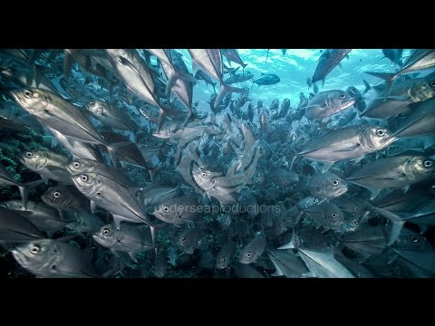 Xxx Mp4 Undersea Realm In 4K Underwater Nature Video Stock Footage Demo Reel UltraHD UHD 3gp Sex