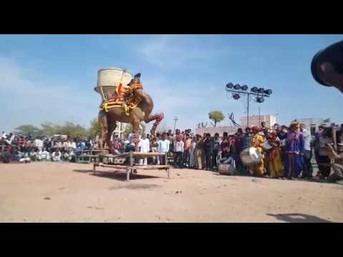 Nagaur Cattle Fair(3)