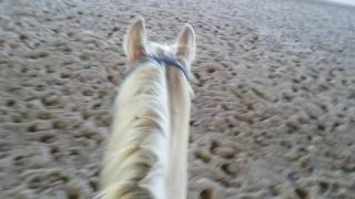 How To Get A Lazy Horse To Stay Loping Part1