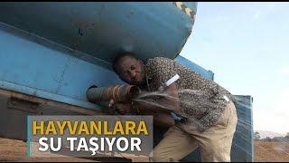 Kuraklıktan etkilenen hayvanlara kiralık kamyonla su taşıyor