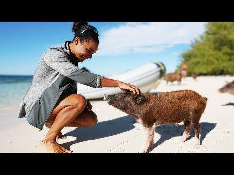 Xxx Mp4 The Other Pig Island In The Bahamas— Sailing Uma Step 154 3gp Sex