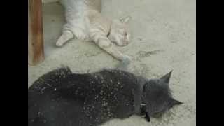 Rocky Tripping on Catnip