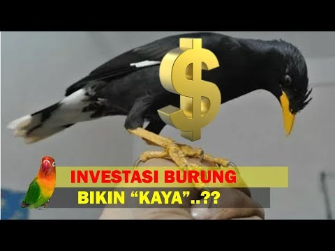 Investasi 5 Burung Ini, Kelak Kamu Bisa Kaya... Percaya??