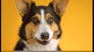 Doggy Dentures - PEDIGREE® DENTASTIX® Commercial